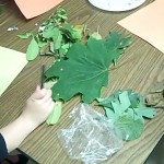 leaves for fall crafts