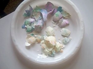 shells  for easter crafts project