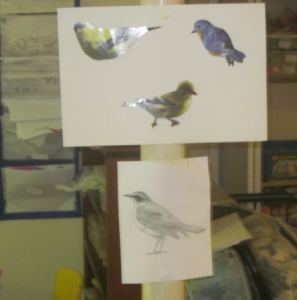 birds to draw