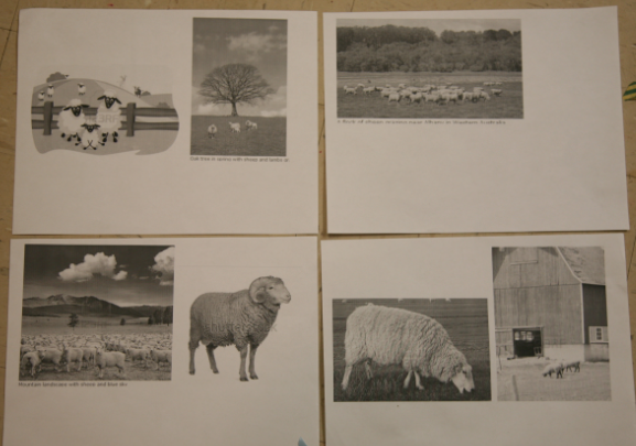 sheep images