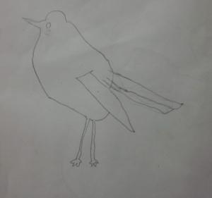 bird in pencil